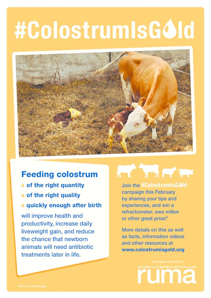 Resources - Colostrum is GoldColostrum is Gold